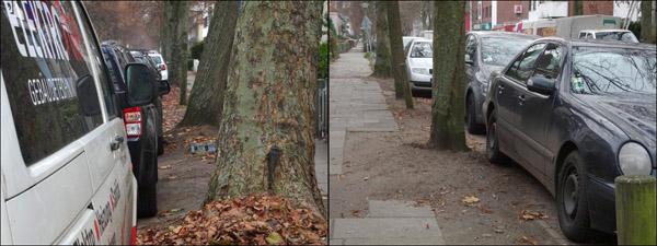 parking_treeroots